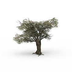 游戏元素树3D模型3d模型