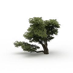 公园装饰树模型3d模型