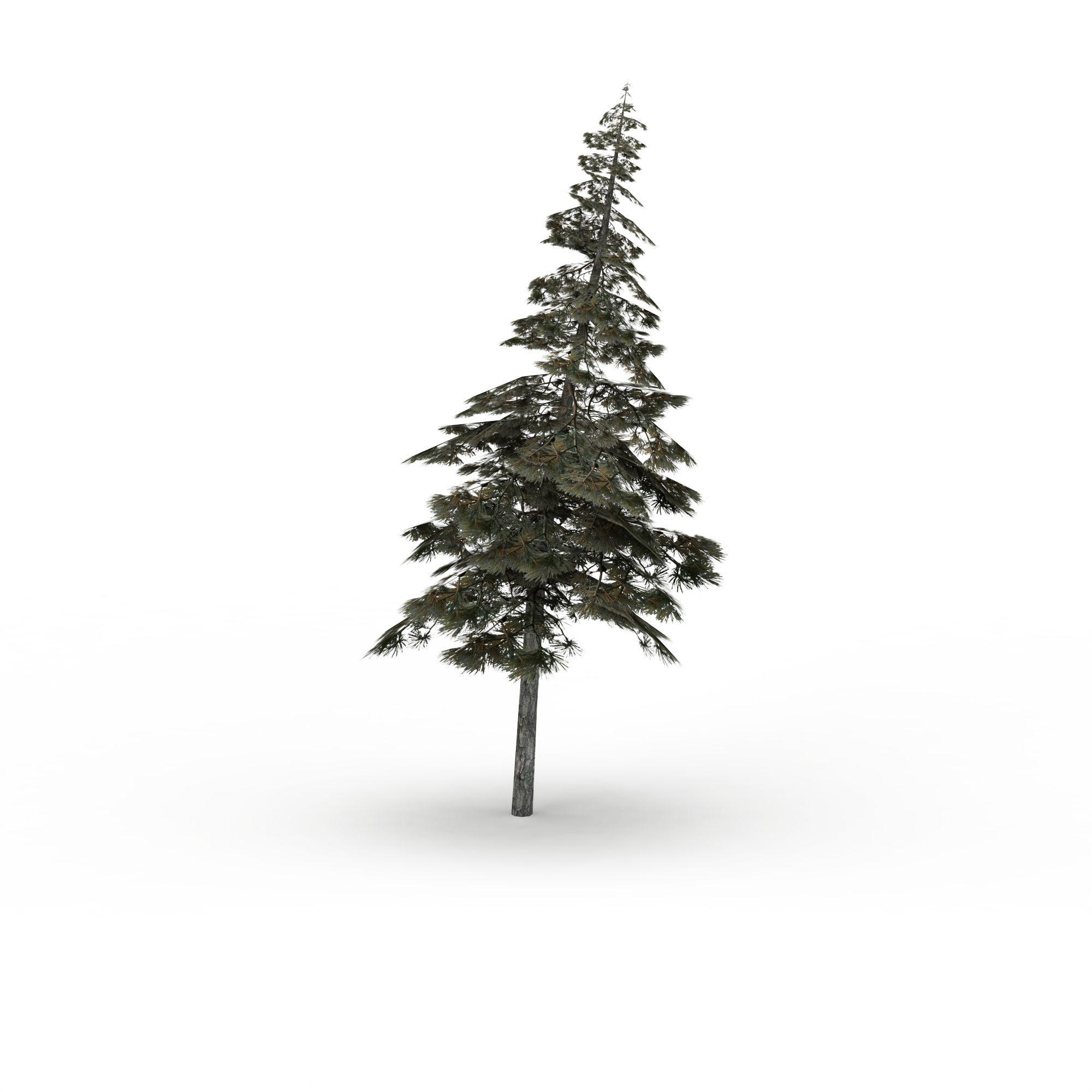 植物 树 松树3d模型 松树png高清图  松树高清图详情 设计师 3d学院