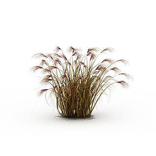 枯黄芦苇草3d模型