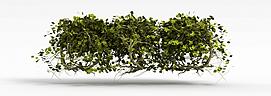 3d<font class='myIsRed'>植物</font>花草模型
