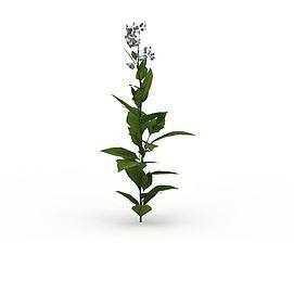 庭院花草3d模型