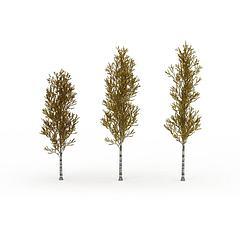秋树模型3d模型