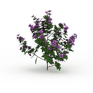 紫色花3d模型