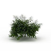 景观树3D模型3d模型