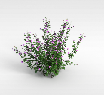 公园紫色花