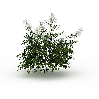 景观绿植3d模型
