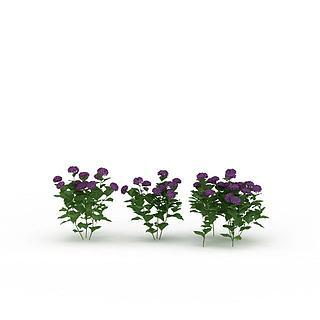 紫色<font class='myIsRed'>花</font>3d模型