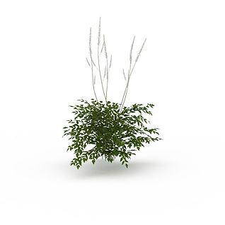 园林绿植3d模型