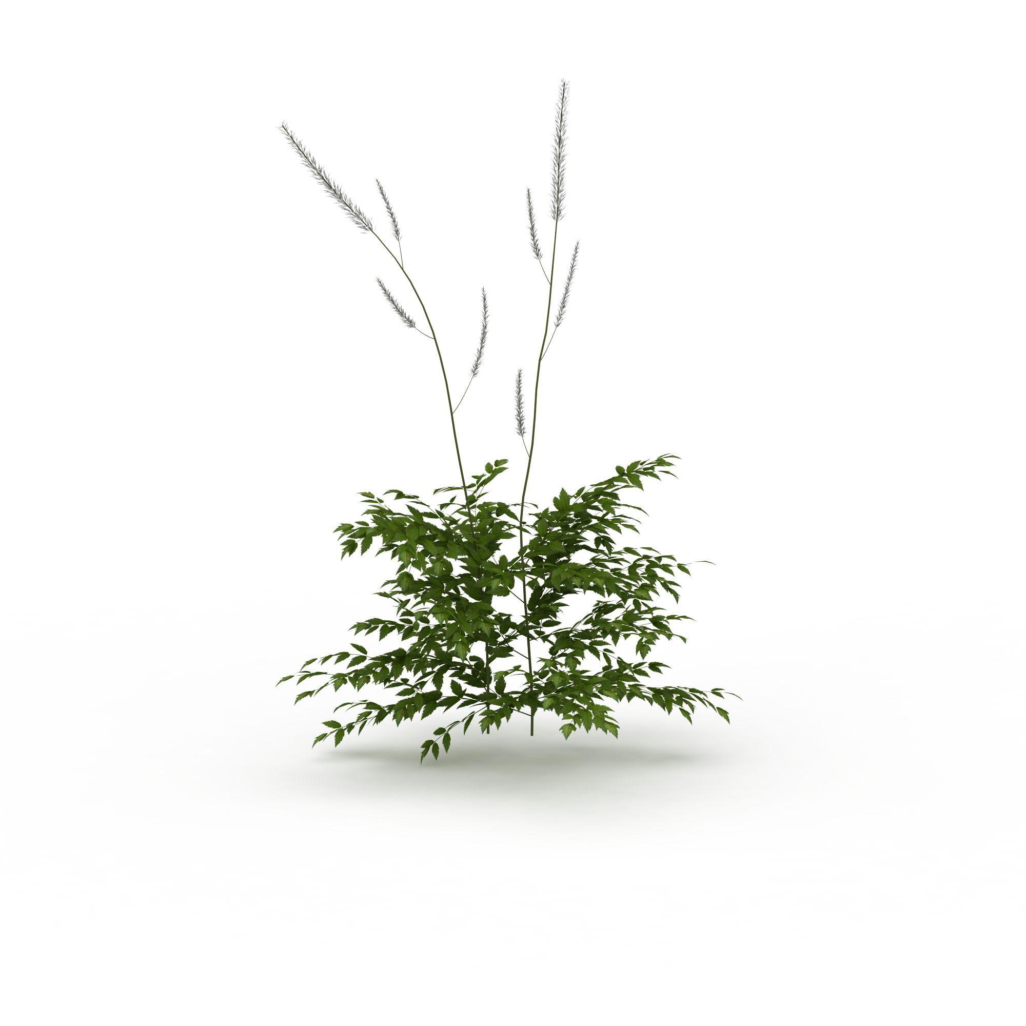小树图片_小树png图片素材_小树png高清图下载