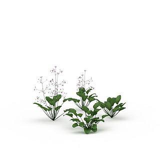 绿色花3d模型