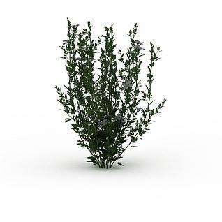 绿植3d模型