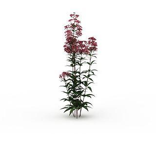 粉色花3d模型