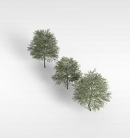 3d<font class='myIsRed'>树</font>木模型