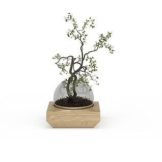盆栽绿植3d模型
