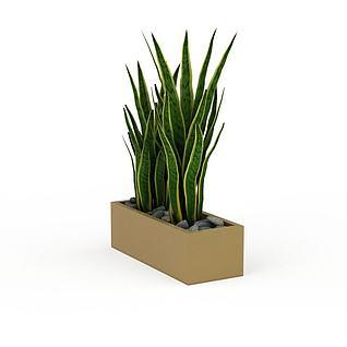 绿色植物盆景3d模型