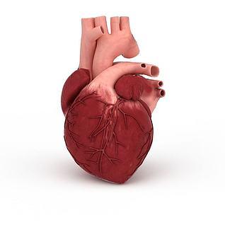 3d心脏模型