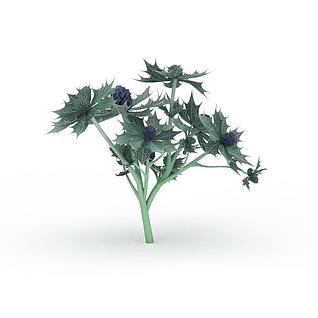 滨海刺芹3d模型