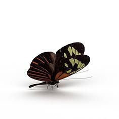 花蝴蝶3D模型3d模型
