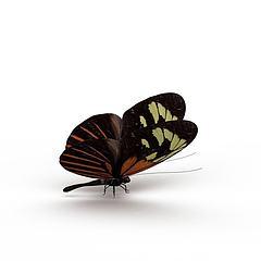 花蝴蝶模型3d模型