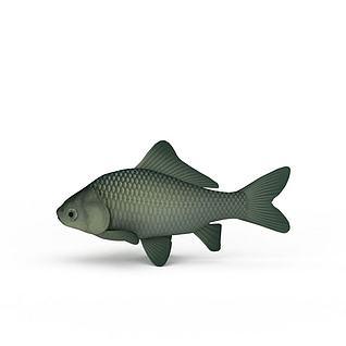 鲤鱼3d模型