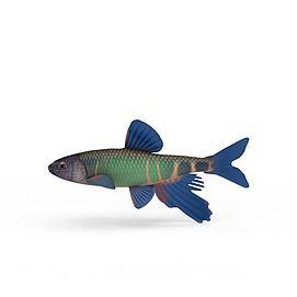 热带鱼模型