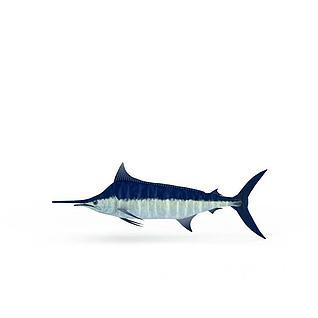 蓝色旗鱼3d模型
