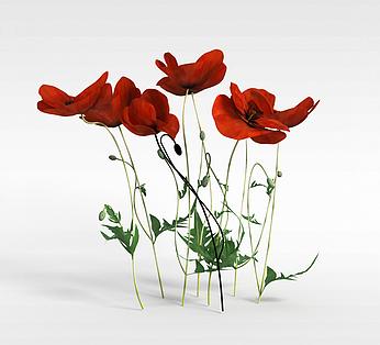 红色点缀花