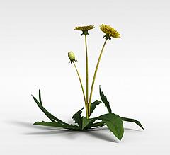 草地黄花模型3d模型