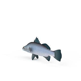 鲤子3d模型