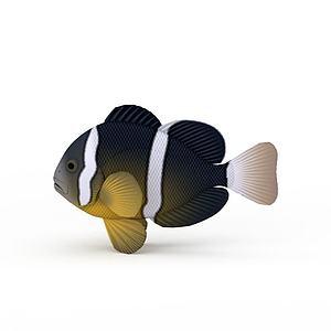 斑馬魚模型