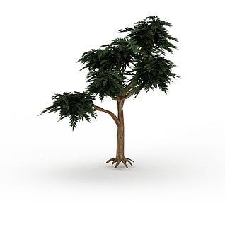 公园观赏树3d模型