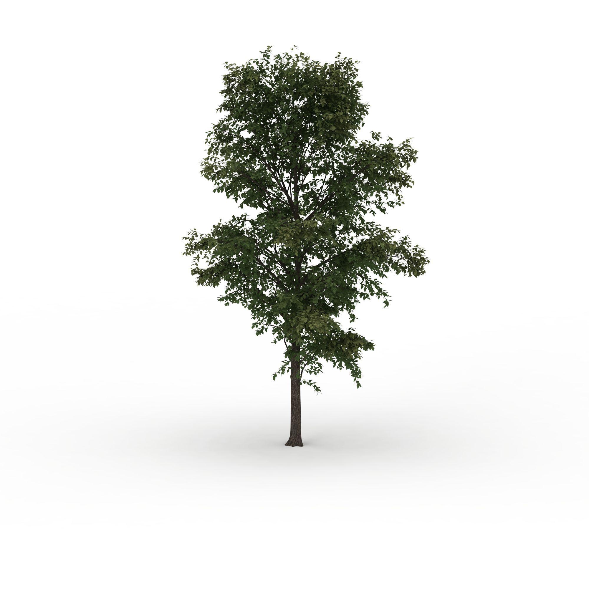 院子绿化植物png高清图  院子绿化植物高清图详情 设计师 3d学苑 模型