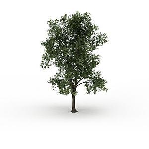 寺院觀賞樹模型3d模型