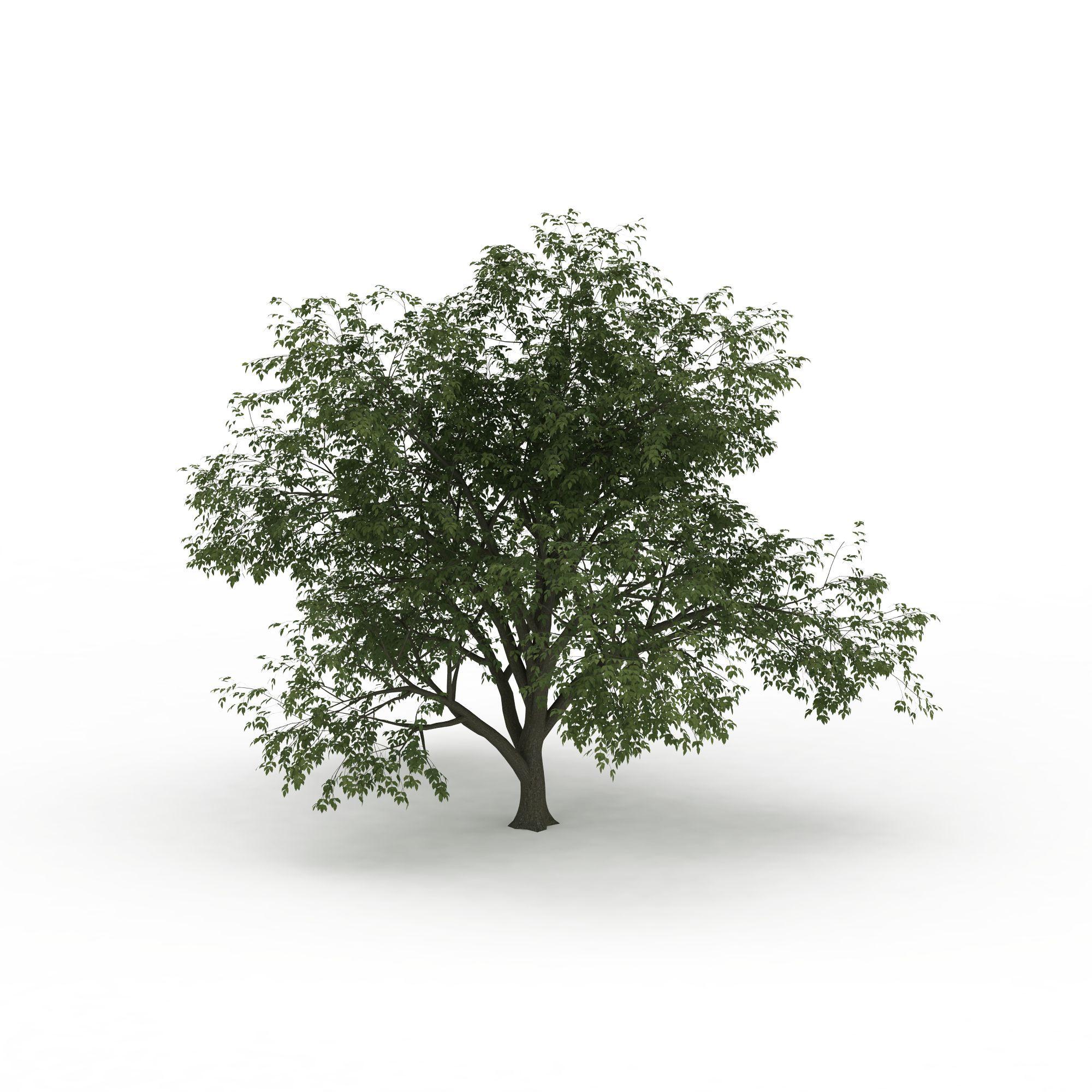 格式 png 风格 现代 上传时间 2016/03/23  关键词:细叶景观树3d模型
