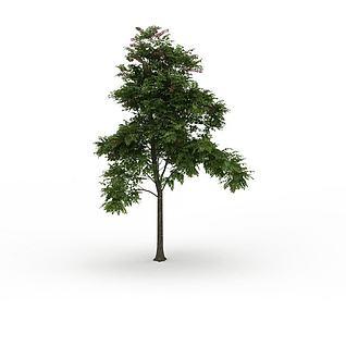 园林细叶观赏树3d模型