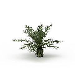 蕨类植物模型3d模型
