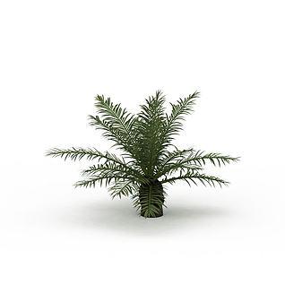 蕨类植物3d模型
