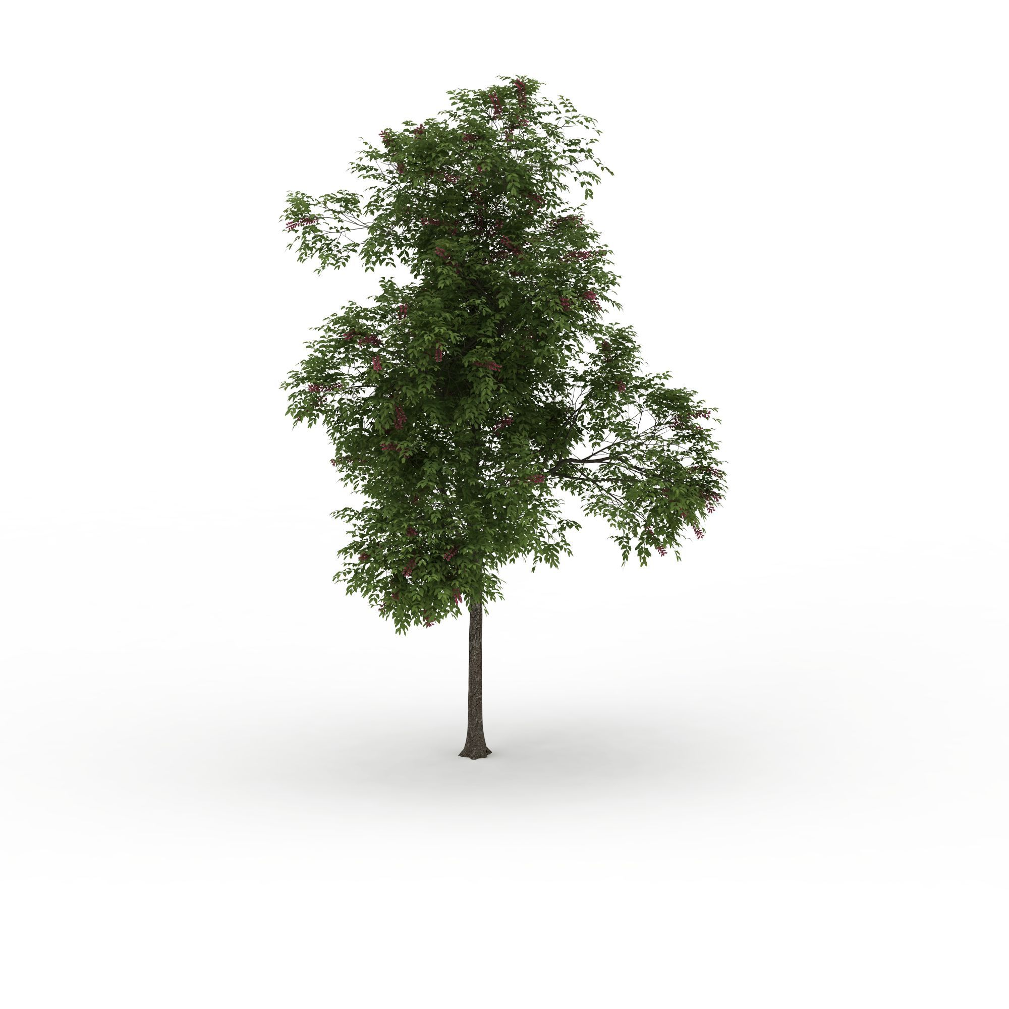 庭院景观落叶树高清图详情 设计师 3d学院 模型名称 庭院景观落叶树图片