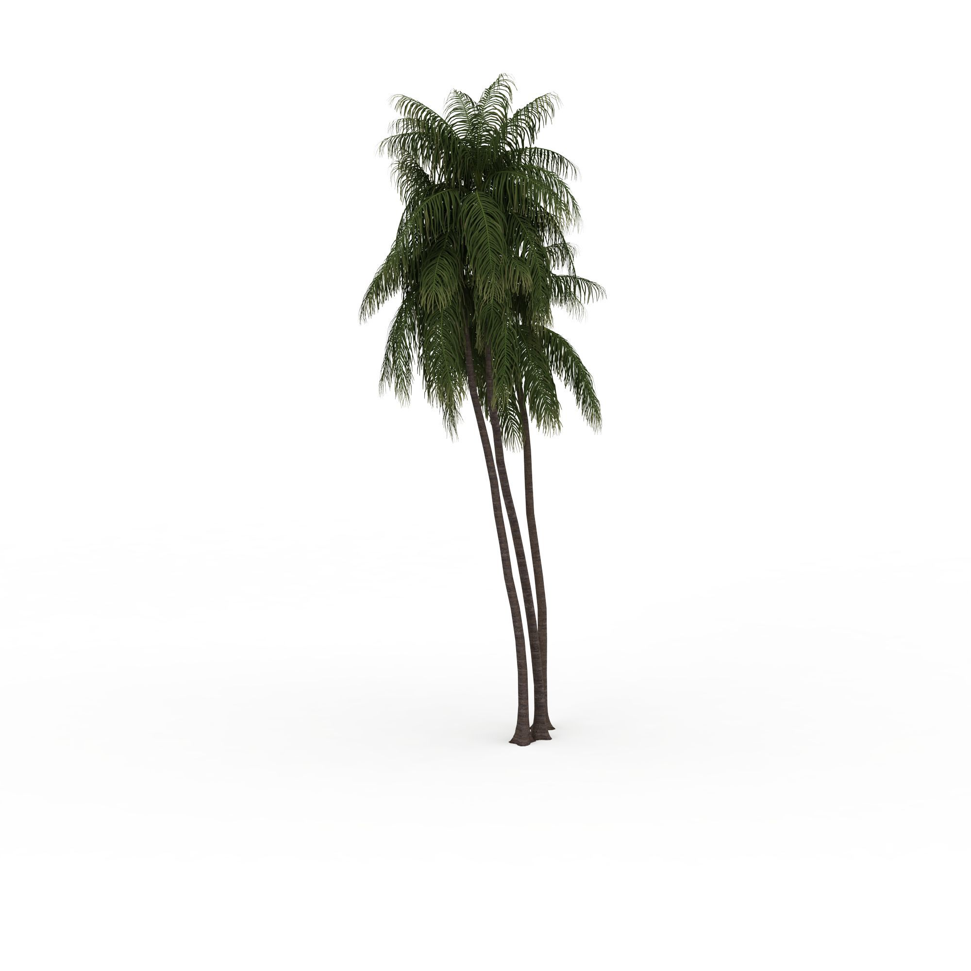 蕨叶树图片_蕨叶树png图片素材_蕨叶树png高清图下载