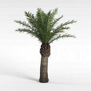 针叶绿树模型