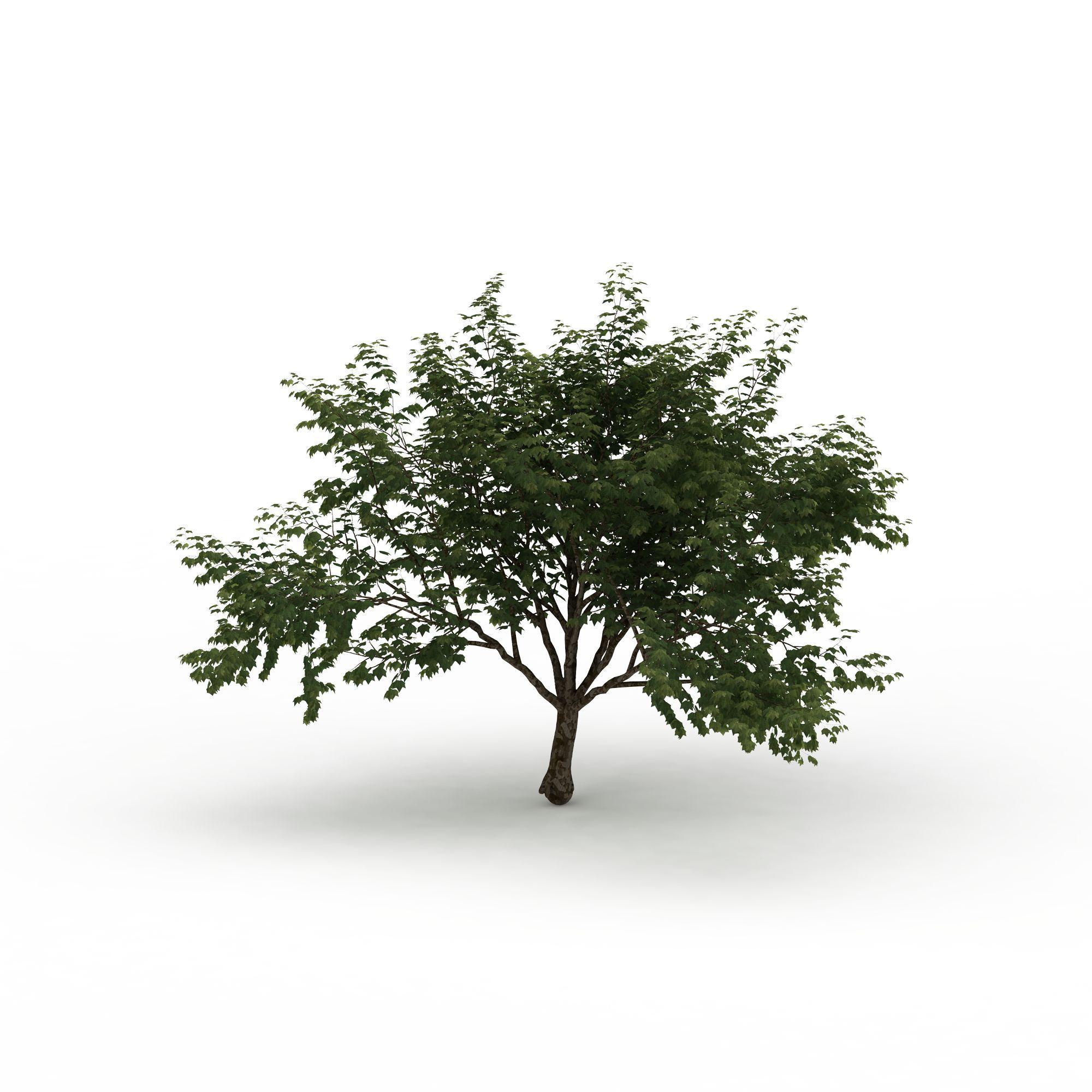公园落叶树高清图详情 设计师 3d学院 模型名称 公园落叶树3d模型图片