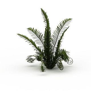 蕨类<font class='myIsRed'>植物</font>3d模型