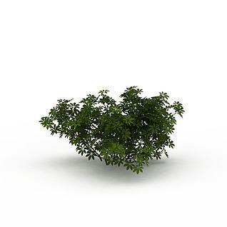公园绿化植被3d模型