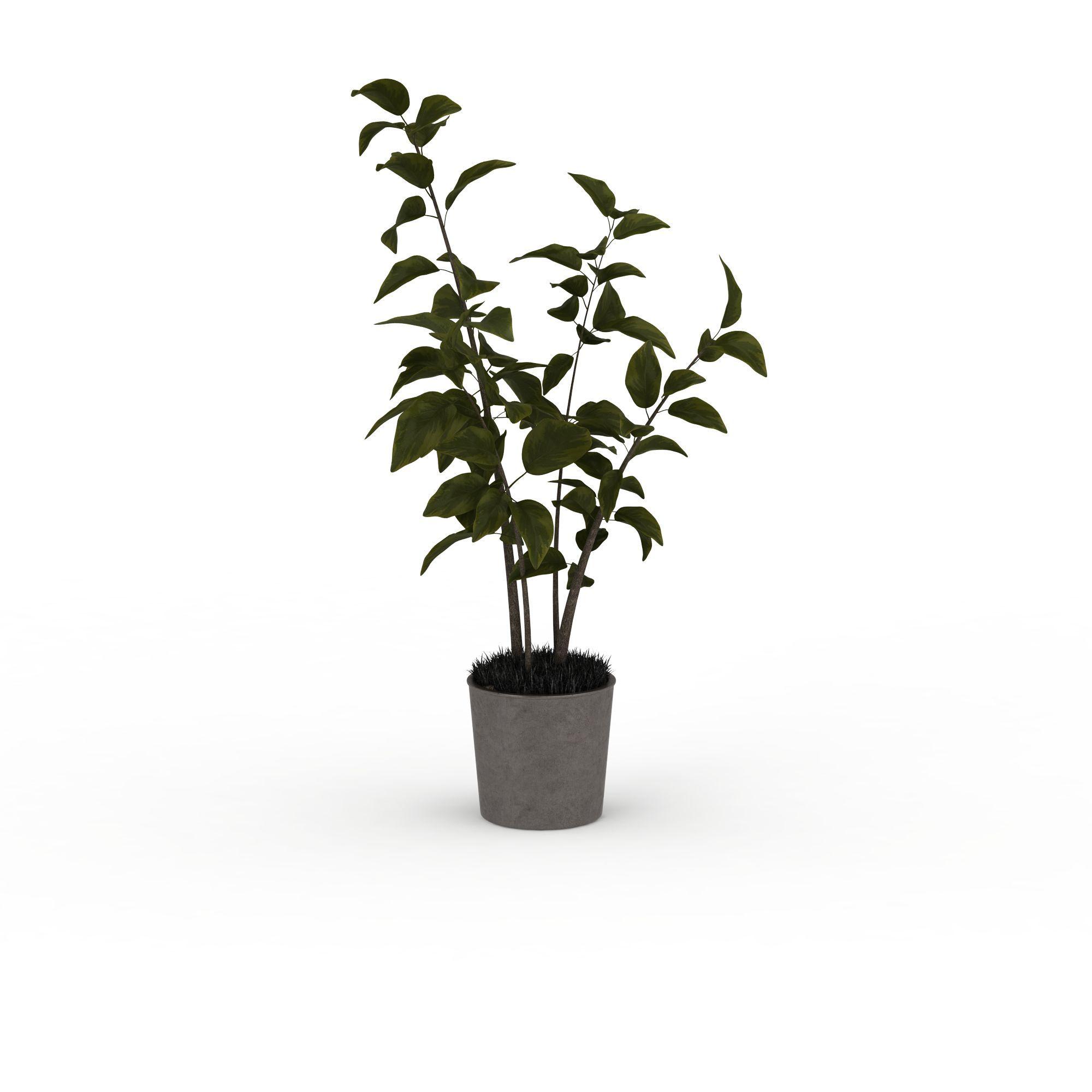 植物 花草 绿色盆景3d模型 绿色盆景png高清图  绿色盆景高清图详情