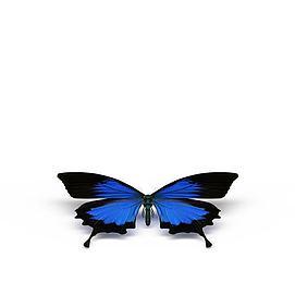 蓝色蝴蝶模型
