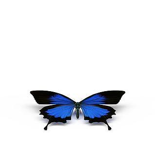 蓝色蝴蝶3d模型