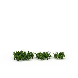 绿叶植物3d模型