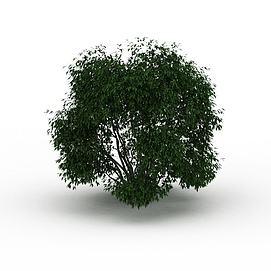 3d灌木模型