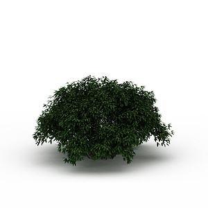 3d室外灌木模型